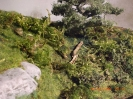 Umgefallene Bäume verwittern.