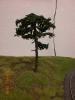 Und schon wächst der ersten Baum.