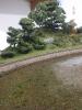 Blick über den Lagerplatz. Links im Bild die beiden frischen Bäume.