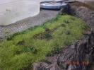 Gras wächst und andere kleinere Pflanzen und Büsche.