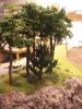 Über den Einschnitt fotografiert. Hier ist ein jüngerer Baum hinzugekommen.