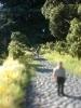 Die Straße mit natürlichem Hintergrund.