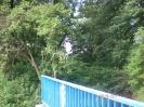 Über das Geländer geschaut sieht man nur Wildnis.