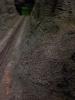 Waldboden und Geröll