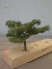 Ein Baum, mit Laub, die Art kenne ich leider nicht...