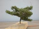 ...vielleicht sind wir ja hier am Ende einer neuen Spezies begegnet. Solange ist es ein Baum.