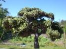 Lange hat es gedauert, aber nun habe ich endlich diesen Baum fertig und bei Sonne abgelichtet.