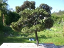 Dieser Baum ist für den Hügel, um die Lücke zum Unterholz etwas zu schließen.