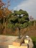 Ein weiterer Baum für den Club.
