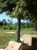 Ein spezieller Baum mit einer Viertelkrone und 35 cm Höhe für den Modellbahnclub.